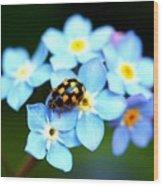 14 Spot Ladybird Wood Print
