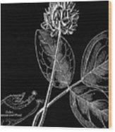 Vintage Botanical Illustration Wood Print