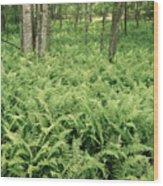 146112 Ferns In Pisgah Nat Forest V Wood Print