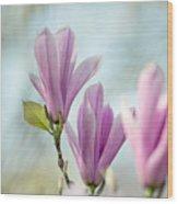Magnolia Flowers Wood Print