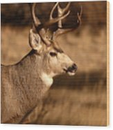 15-point Mule Deer Stepping Along Wood Print