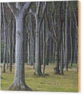 150403p254 Wood Print