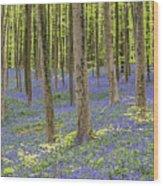150403p366 Wood Print