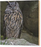150501p123 Wood Print