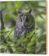 150501p136 Wood Print