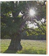 151124p105 Wood Print