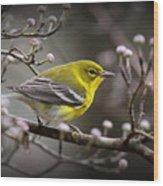 1574 - Pine Warbler Wood Print