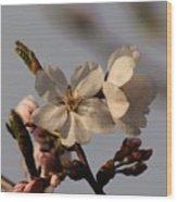 Black Cherry Tree  Wood Print