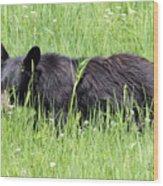 American Black Bear Yellowstone Usa Wood Print