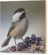Black Capped Chickadee Wood Print