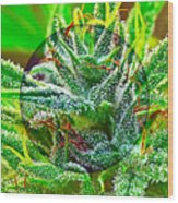 Cannabis 420 Collection Wood Print