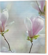 Magnolia Flowers Wood Print