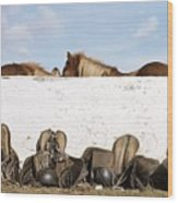 162669 Horse Walls Animals National Geographic Wood Print