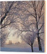 Amazing Landscape With Frozen Snow Covered Trees At Sunrise   Wood Print