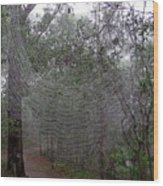Australia - The Spider Wood Print