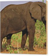 Botswana Wood Print