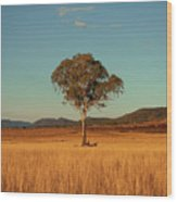 Country Agricultural And Farming Field. Wood Print