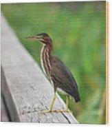 81- Green Heron Wood Print