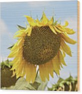 Nice Sunflower Wood Print