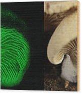 Luminescent Mushroom, Panellus Stipticus Wood Print