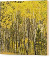 Rocky Mountain Autumn Wood Print