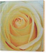 18 Yellow Roses Wood Print