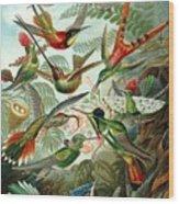 1899 Hummingbird Species Art Forms Of Nature Print Wood Print