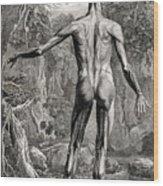 18th Century Anatomical Engraving Wood Print
