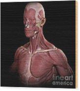 Facial Muscles Wood Print