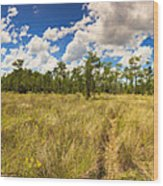 Florida Everglades Wood Print