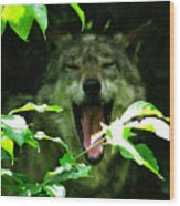 The Wild Wolve Group A Wood Print