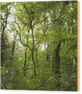 Jungle 1 Wood Print