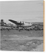 1944 B-24 H Plane In Field W/ Sheeep Pantanella Airfield Italy Wood Print