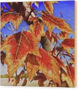 #199 Red Maple Wood Print
