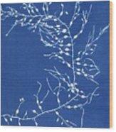 19th-century Alga Cyanotype Wood Print