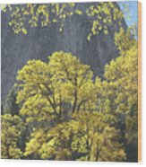 1m6610 Middle Cathedral Rock In Autumn Wood Print