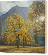1m6611-oak Trees And Middle Cathedral Rock In Autumn Wood Print