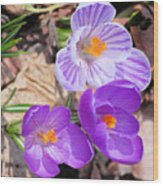 1st Flower In Garden 2010 Photo Wood Print