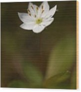 Arctic Starflower Wood Print