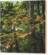 A Touch Of Autumn Wood Print