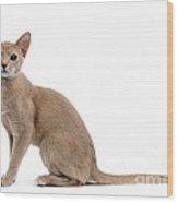 Abyssinian Kitten Wood Print