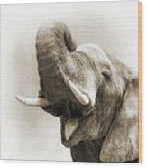 African Elephant Closeup Square Wood Print