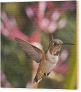 Allen's Hummingbird Wood Print by Mike Herdering