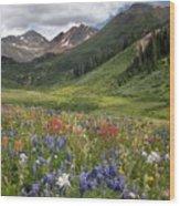 Alpine Flowers In Rustler's Gulch, Usa Wood Print