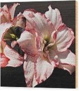 Amaryllidaceae Hippeastrum Amorice Wood Print
