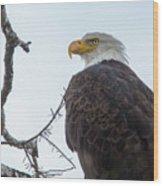 American Bald Eagle Wood Print