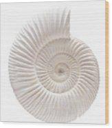 Ammonite Wood Print by Gavin Kingcome