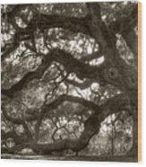 Angel Oak Live Oak Tree Wood Print