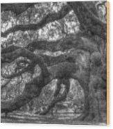 Angel Oak Tree Charleston Sc Wood Print by Dustin K Ryan
