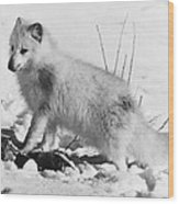 Arctic Fox Wood Print